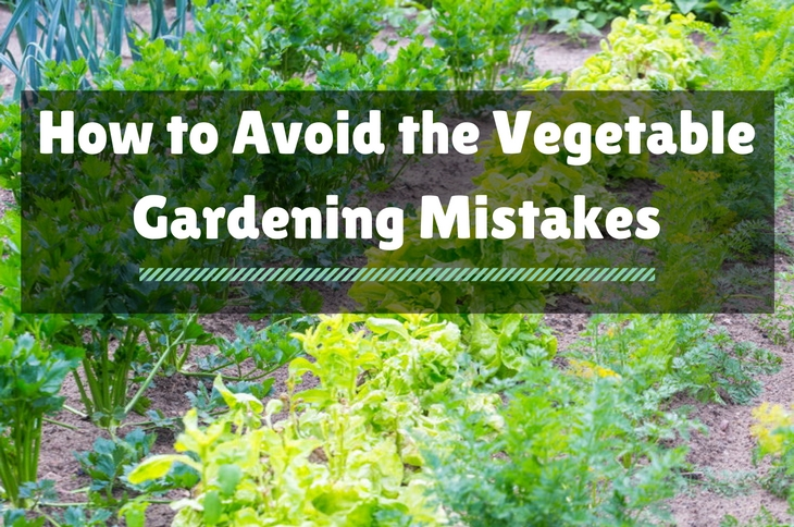 Vegetable Gardening Mistakes