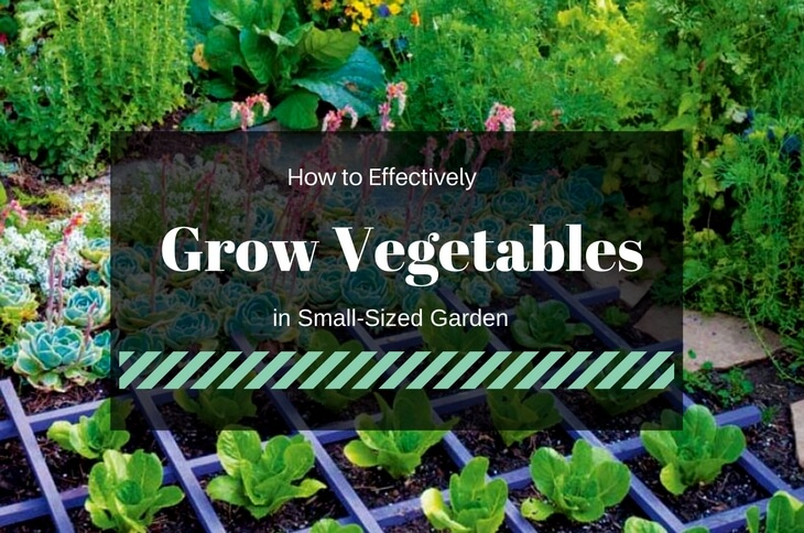 Grow Vegetables in Small-Sized Garden